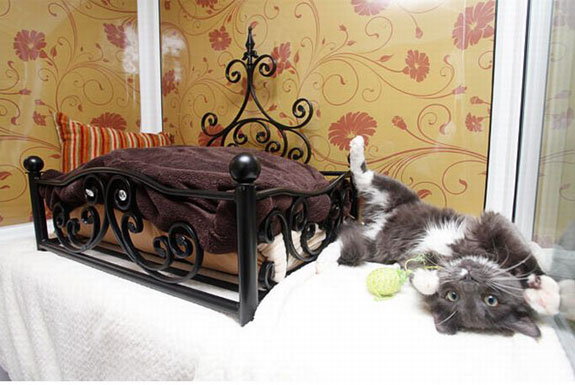 The All-Suite, All-Cat Hotel