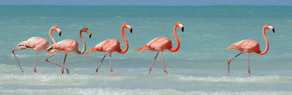 holbox flamingos1 Isla Holbox: The Un Cancun
