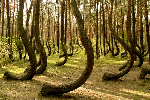The Mystery of the Crooked Forest