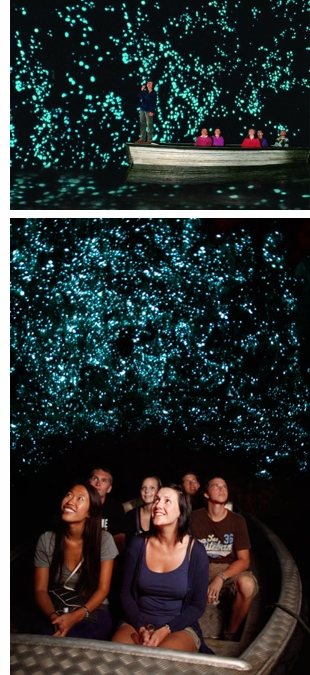 waitomo glowworm caves nz s The Glowworm Cave