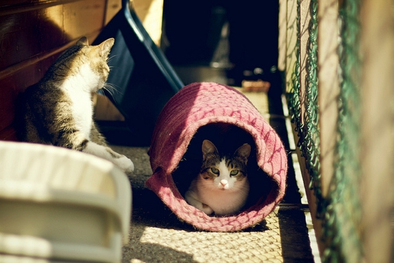The Cat Houseboat of Amsterdam