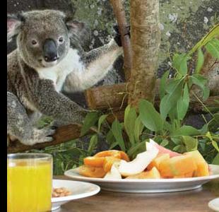 hamilton island koala breakfast 10 Reasons to Visit Hamilton Island, Australia
