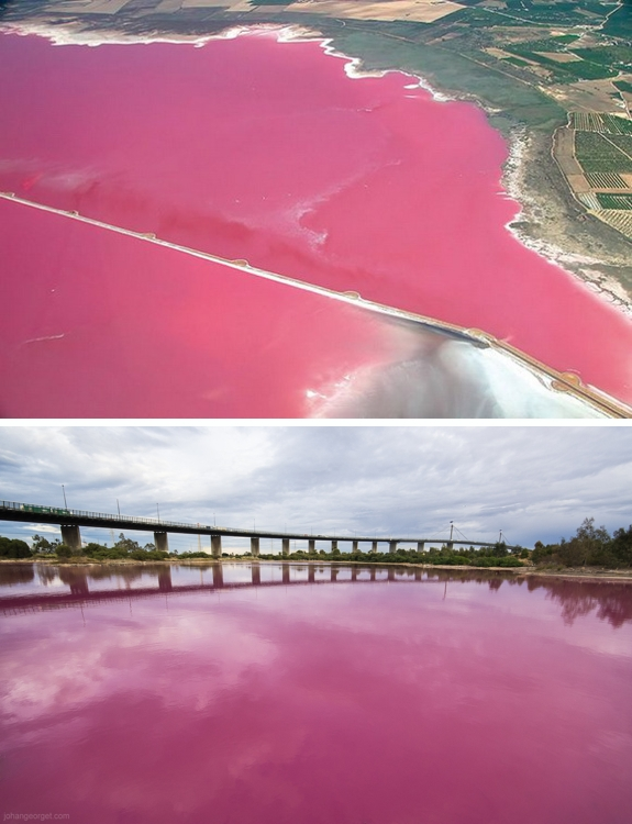 salina de torrevieja pink lake spain Pink Lakes of the World