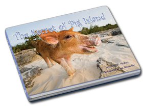 secret of pig island bahamas This Little Piggy Goes Swimming